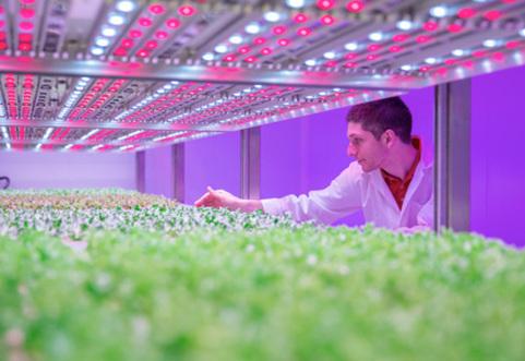 Making light work of growing food