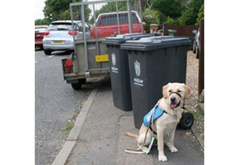 Image credit: Guide dogs
