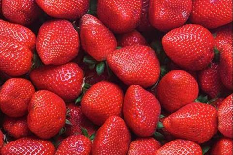 LED lighting in strawberry cultivation